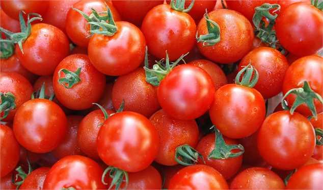 گوجه فرنگی ارزان می شود