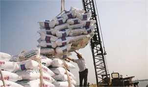 واردات برنج ۵۰ درصد کاهش یافت/ بدنبال واردات از تایلند و آمریکای جنوبی هستیم