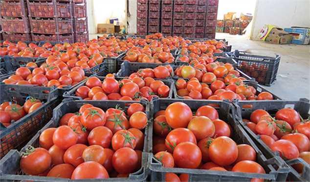 ماجرای گوجه فرنگیهای برگشت خورده از عراق
