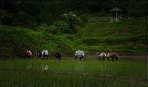 دریافت مالیات از کشاورزان؛ آغازی برای یک پایان