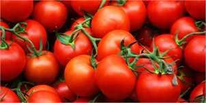 صادرات ۱۴ هزار تن گوجه فرنگی طی ۱۱روز به کردستان عراق/ ماجرای افت شدید قیمتها در مرز