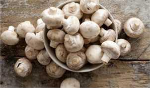 کمیابی کود مرغ، تولید قارچ را کاهش داد/ افت ۳۰ درصدی تقاضای قارچ