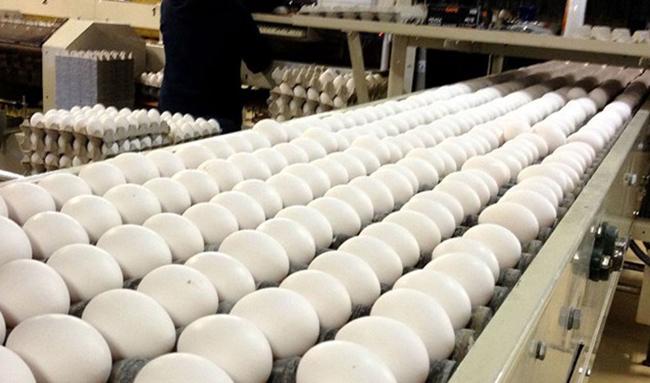 کاهش ۲۵درصدی تولید تخم مرغ/ دولت در تهیه واکسن آنفلوانزا کمک کند