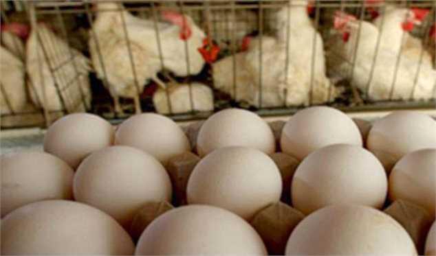 افزایش قمیت تمام شده هر کیلوگرم تخممرغ به ۱۷۴۰۰ تومان/ درخواست برای افزایش نرخ مصوب