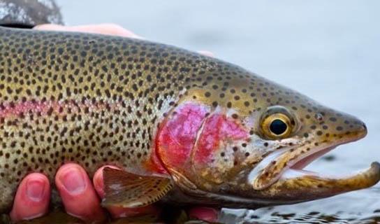 تعطیلی ۱۰ درصد از استخرهای پرورش ماهی