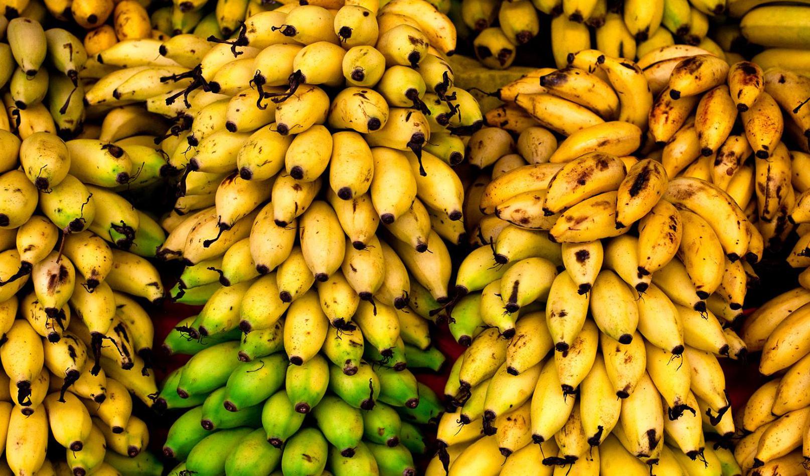 کمبودی در عرضه میوه نداریم؛ انحصار در واردات موز، قیمت را بالا برد
