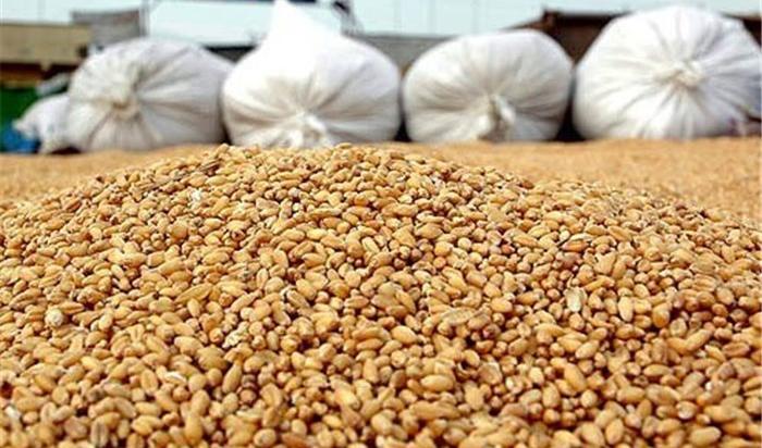 وابستگی به واردات نهادههای دامی، بیتوجهی به امنیت غذایی است