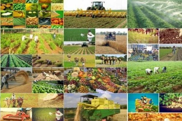 رونمایی از ۴۹ بذر جدید محصولات کشاورزی و باغی