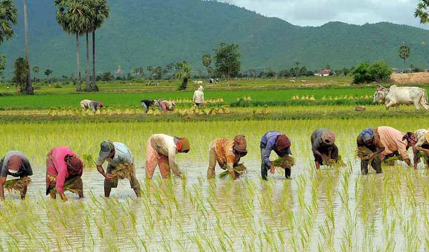 ایران دارای رتبه ۲۸ تولید برنج در دنیا