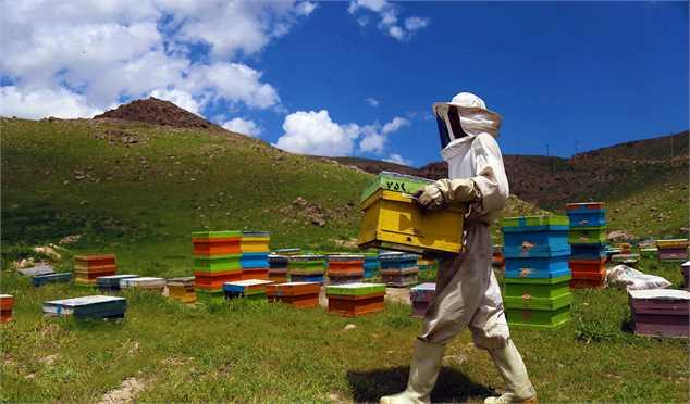تخصیص ۱۵ هزار تُن شکر برای زمستانگذری زنبورداران