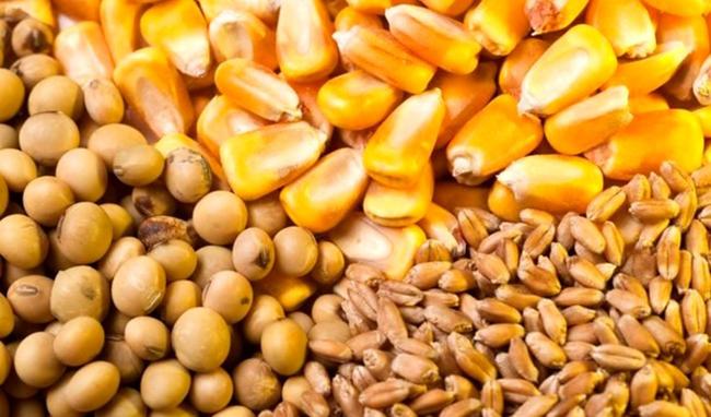 تسهیل و کمک به تامین ارز نهادههای پایه و واسطه بخش کشاورزی
