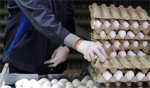 ارتباط گرانی تخم مرغ با تعلیق یک قانون توسط رئیس جمهور/ هیچ کدام از وزارتخانهها گردن نمیگیرند