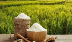 واردات برنج پرمحصول راهی برای عرضه برنج ارزان در بازار/قیمت هر کیلو برنج پاکستانی ۲۵ هزار تومان