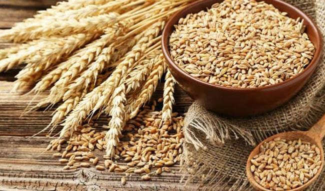 دولت گندم را ۲۳ درصد گرانتر از نرخ جهانی خریداری کرد