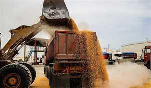 افزایش هزار تومانی قیمت خرید تضمینی گندم از کشاورزان