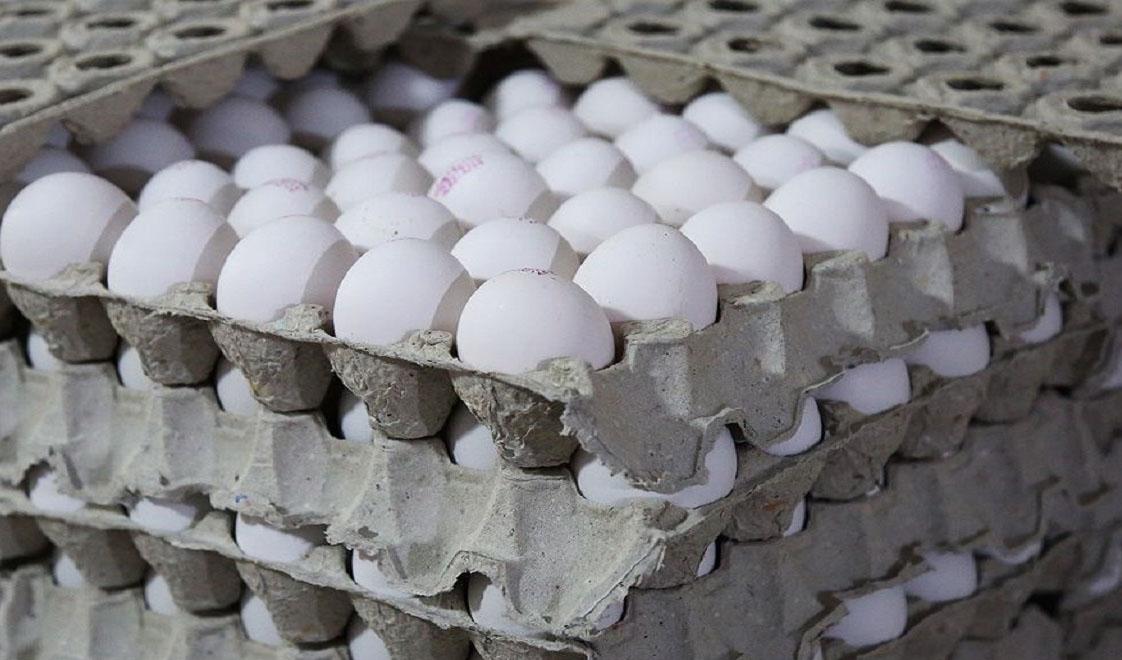 آینده روشنی پیش روی تولید تخم مرغ وجود ندارد