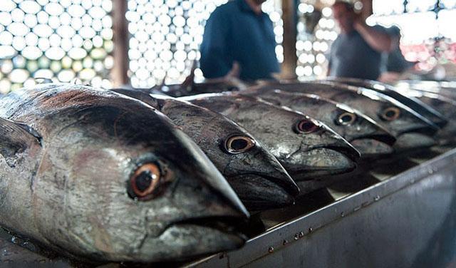 مصرف ماهی ۵۰ درصد کاهش یافت