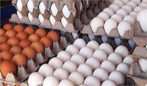 صادرات تخممرغ در دستور کار وزارت جهاد کشاورزی
