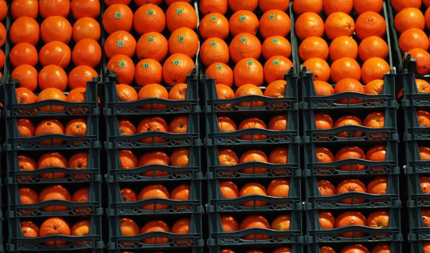 وزارت صنعت: میوههای دپو شده برای دلالان بوده است