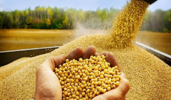 سهم دولت از واردات کالاهای اساسی به ۵۰ درصد افزایش یافت