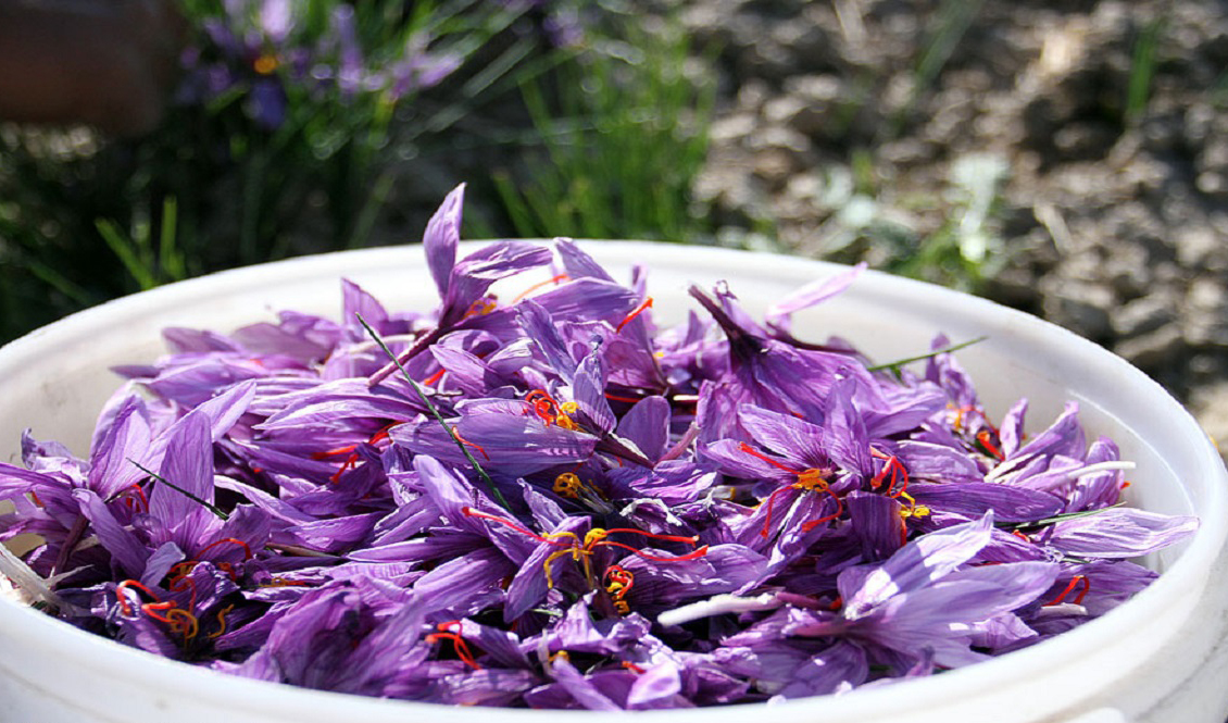 قیمت زعفران ۳۰ درصد کمتر از نرخ واقعی/ حداکثر قیمت هر مثقال زعفران ۷۰ هزار تومان