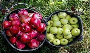 قیمت انواع میوههای فصلی/ گرانی سیبزمینی به دلیل جابهجایی فصل