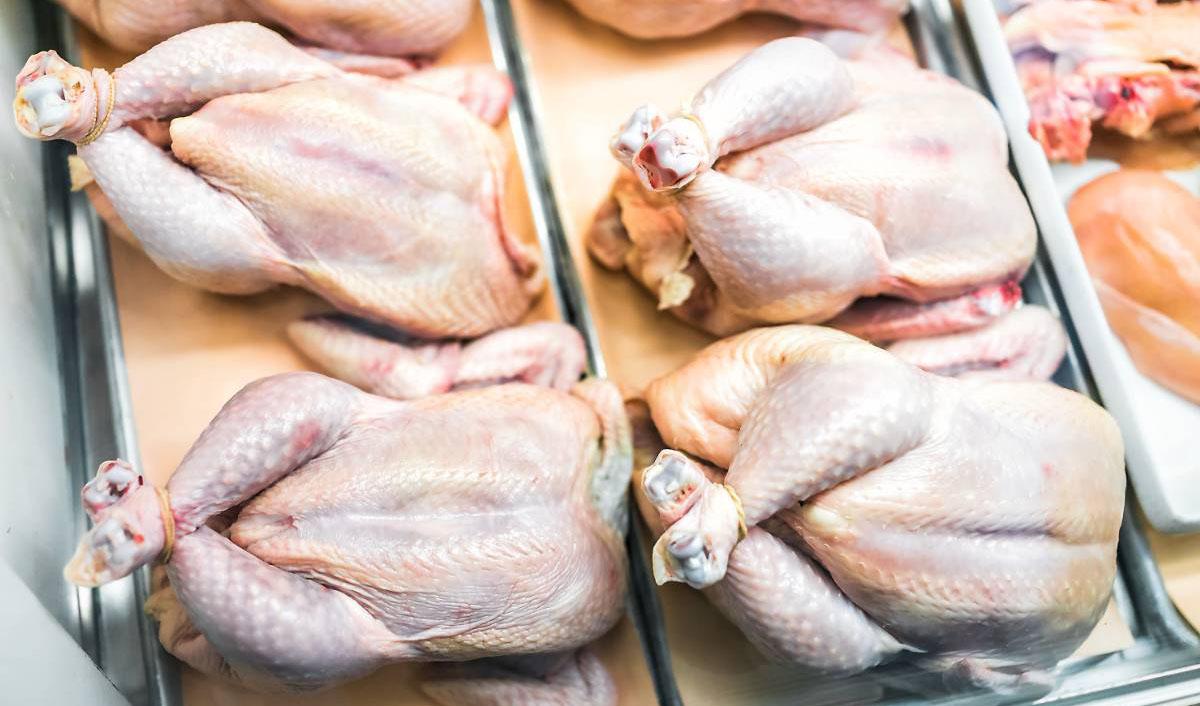 بیبرنامگی دولت ترجیعبند ماجرای گرانی مرغ