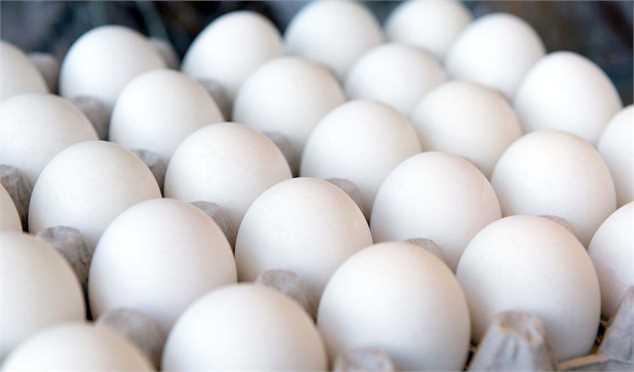 تخم مرغ گوی گرانی را از مرغ ربود!