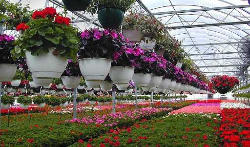 قابلیت صادرات ۱ میلیارد دلاری گل/ وزارتخانههای نیرو و صمت از موانع افزایش تولید و صادرات گل هستند