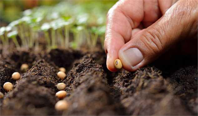 هشدار درباره مشکلات احتمالی تامین بذر محصولات اساسی/ خطر افتادن بازار بذر به دست دلالان