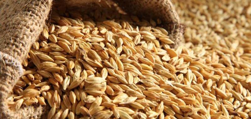 پیشبینی کاهش خرید تضمینی گندم در سالجاری/ نیاز احتمالی به واردات، ۴ میلیون تن گندم