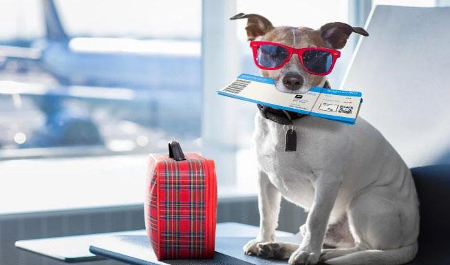 شرایط  و هزینه حمل حیوانات با هواپیما چیست؟