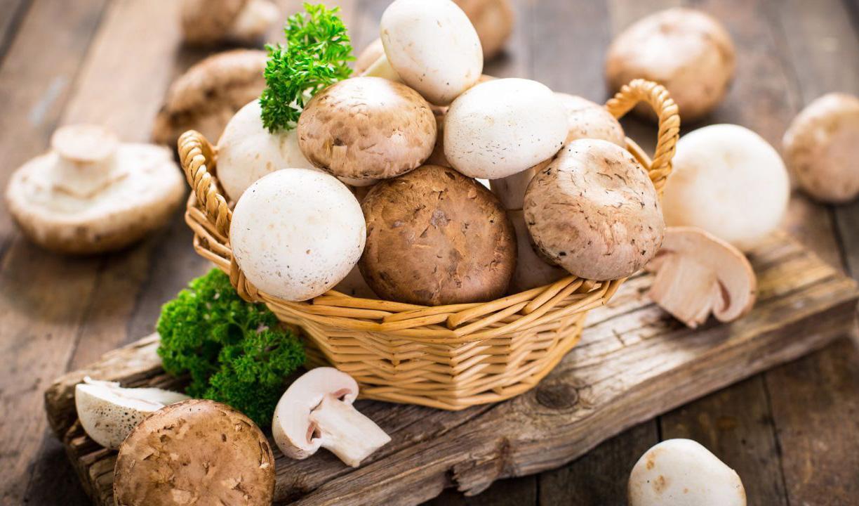 افت تولید قارچ ناشی از نبود کلش در بازار/ قیمت منطقی هر کیلو قارچ ۴۸ هزار تومان
