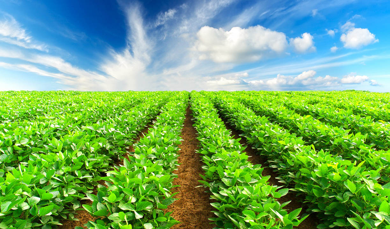 کشت فراسرزمینی؛ میانبری برای توسعه کشاورزی