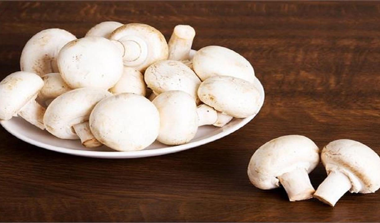 افت ۳۰ تا ۴۰ درصدی تولید قارچ در راه است/ قیمت هر کیلو قارچ ۴۰ هزار تومان