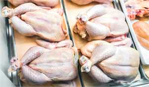 گرانی مرغ قابل پیشبینی بود/ با آمارسازی آدرس غلط دادند