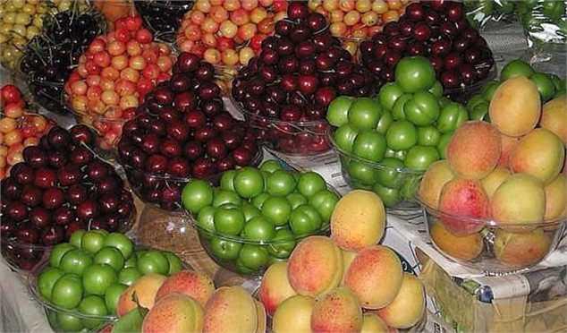 گیلاس، پیشتاز قیمت در بین سایر میوهها