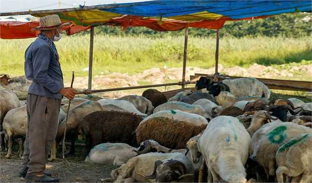 راهکار کاهش قیمت گوشت قرمز چیست؟