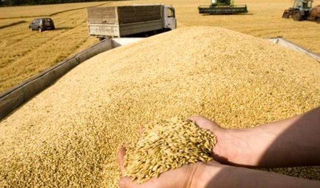 احتمال افزایش ۵۰ درصدی قیمت خرید تضمینی گندم برای سال زراعی پیشرو