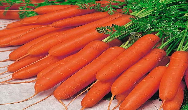 توزیع هویج زیر ۱۰ هزار تومان تا هفته آینده