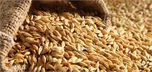 پیشبینی دولت قبل غلط از آب درآمد/ دولت جدید باید ۶ میلیون تن گندم وارد کند
