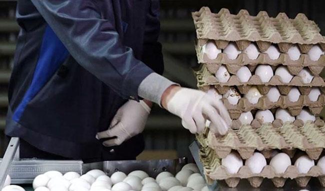 تخم مرغ دانهای ۱۴۴۰ تومان شد/ کاهش قیمت با افزایش عرضه